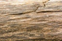 Yttersida av det gamla spruckna trädet Gammal naturlig wood bakgrund och textur royaltyfri bild