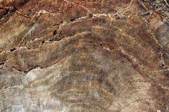 Yttersida av ett gammalt sprucket träd Trä texturerar royaltyfria foton