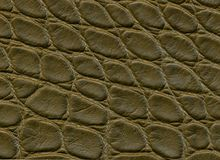 Yttersida av mörkt krokodilläder Bakgrund Royaltyfri Foto
