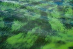 Yttersida av sjövatten som blommar med alger Arkivbild