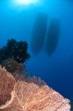 yttersida för hav för fartygegypt röd rev Royaltyfria Foton