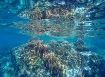Yttersida för korallrev nästan av havet under lågvatten Bräckligt ekosystem av havet med korall- och havsväxten arkivfoto