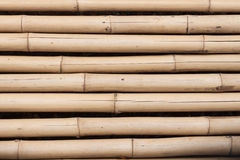 Yttersidan av bambucloseupen Royaltyfria Foton