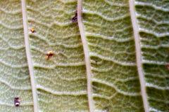Yttersidan av bladet av trädet, bladmakro, detalj, färg, klarhet, linjer som skuggar arkivbilder
