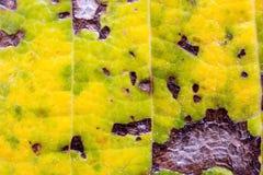 Yttersidan av bladet av trädet, bladmakro, detalj, färg, klarhet, linjer som skuggar royaltyfri fotografi