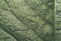 Yttersidan av det gröna bladet Royaltyfri Fotografi