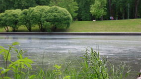 Yttersidan av vattnet täckas med pollen arkivfilmer