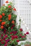 Yttre garnering av blommor och krukor i grekisk stil Fotografering för Bildbyråer
