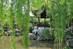 Yu庭院景观 图库摄影