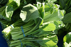 Yu choi, Choi sum, edible rape Stock Photography