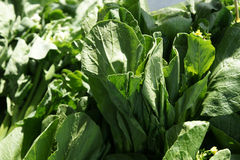 Yu choi, Choi sum, edible rape Royalty Free Stock Photo