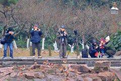 Yuanyang зимы в Ханчжоу, и получает вместе с концом людей, беспечальным стоковые изображения rf