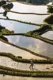 A farmer plowing and harrowing the rice paddy fields at Yuanyang rice terraces stock photos