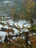 yuanyang de terrasse de riz de matin Images libres de droits
