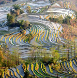 yuanyang de terrasse de riz de matin Photos stock