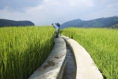 Yuanyang Kina-Augusti 13, 2013: En turist som promenerar risfälten i Yuanyang Royaltyfri Bild