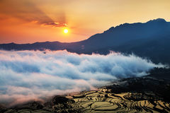 Yuanyang more by sunrise tree Royalty Free Stock Photos