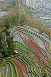 YuanYang Reis-Terrasse Stockfotografie