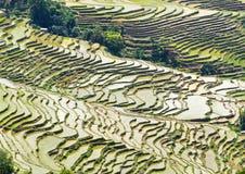 Yuanyang-Reis-Terrassen, Yunnan - China Stockbilder