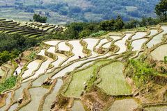 Yuanyang-Reis-Terrassen, Yunnan - China Lizenzfreies Stockfoto