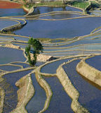 YuanYang Rice Terrace. Yuanyang County is a county of YunNan province, China. It is home to the most spectacular terraced rice fields in the world. The fields Royalty Free Stock Photography