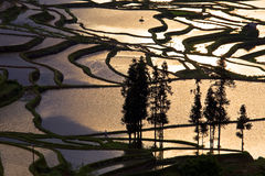 Yuanyang rice terrace. Territory of Yuanyang County is full of mountains, all terraces were built on the hillside,Yuanyang rice terrace located in Yuanyang Stock Images