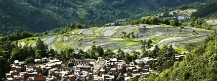 Yuanyang rice terrace Royalty Free Stock Photography