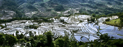 Yuanyang rice terrace. Territory of Yuanyang County is full of mountains, all terraces were built on the hillside,Yuanyang rice terrace located in Yuanyang Royalty Free Stock Photo