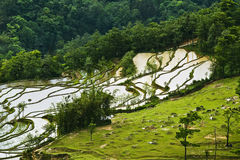 Yuanyang rice terrace Royalty Free Stock Photos