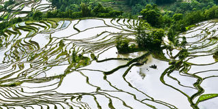 Yuanyang rice terrace. Territory of Yuanyang County is full of mountains, all terraces were built on the hillside,Yuanyang rice terrace located in Yuanyang Royalty Free Stock Photography