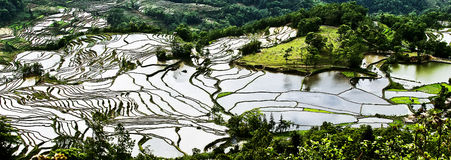 Yuanyang rice terrace Stock Photos