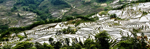 Yuanyang rice terrace Stock Photo