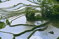 Yuanyang rice terrace Royalty Free Stock Images