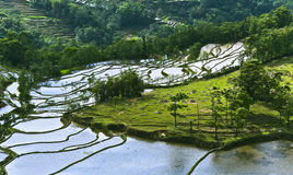 Yuanyang rice terrace. Territory of Yuanyang County is full of mountains, all terraces were built on the hillside,Yuanyang rice terrace located in Yuanyang Stock Photo