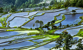 Yuanyang rice terrace Royalty Free Stock Photo