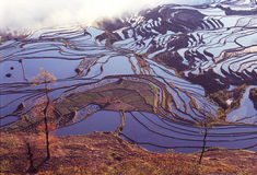 Yuanyang rice terraces Royalty Free Stock Image