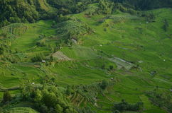 Yuanyang rice terraces Royalty Free Stock Photo