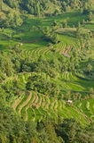 Yuanyang rice terraces Royalty Free Stock Photos
