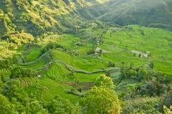 Yuanyang rice terraces Royalty Free Stock Images