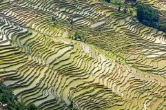 Yuanyang Rice Terraces, Yunnan - China. Terraced rice fields of Hani ethnic people in Yunnan province, China royalty free stock images