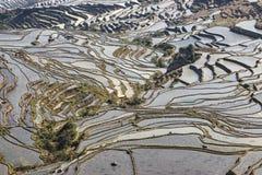 YuanYang ris terrasserar i Yunnan, Kina, en av de senaste UNESCOvärldsarven Royaltyfri Fotografi
