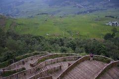 YuanYang risfält Fotografering för Bildbyråer