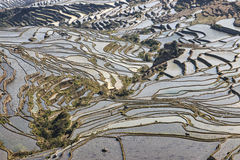 YuanYang ryż tarasuje w Yunnan, Chiny, jeden opóźneni UNESCO światowego dziedzictwa miejsca Fotografia Royalty Free