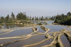 Yuanyang terassenförmig angelegte Felder Lizenzfreies Stockbild