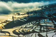 Yuanyang Terrace Sunrise Royalty Free Stock Photos