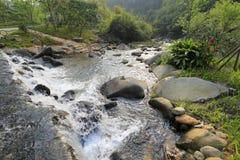 Yuanyang ( mandarin duck ) creek Stock Images