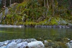 Yuba-Fluss-Moos Lizenzfreies Stockfoto