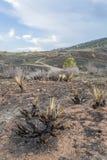Paisaje quemado incendio fuera de control Imagen de archivo libre de regalías