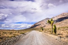Yucas que crecen en el lado de un camino sin pavimentar con una área remota del parque nacional de Death Valley, California imagen de archivo