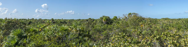 Yucatan jungle horizon Royalty Free Stock Image